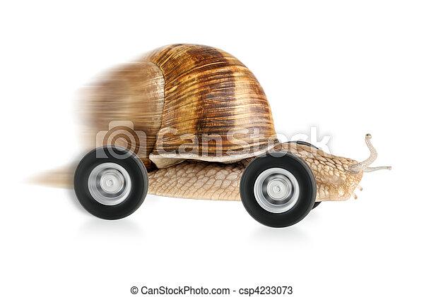 Speedy snail on wheels - csp4233073