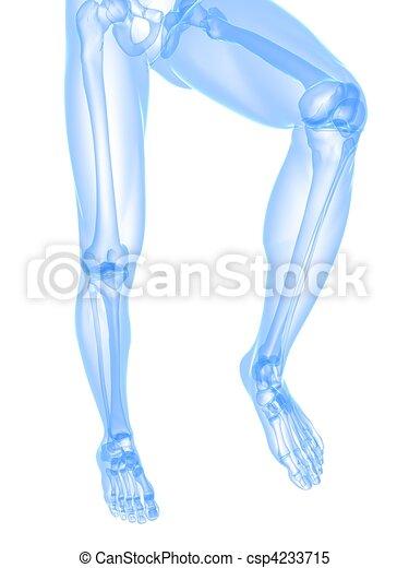 leg x-ray illustration - csp4233715