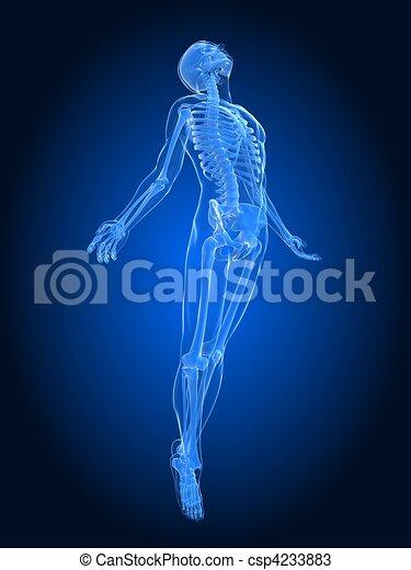 rising body - x-ray  - csp4233883