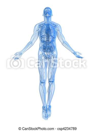 rising body - x-ray - csp4234789