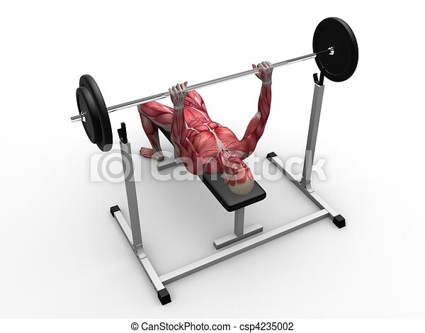 Clip Art of male workout - bench press - 3d rendered anatomy ...