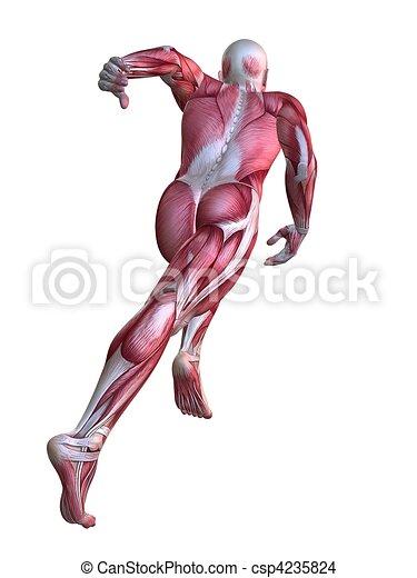 3d muscle model - csp4235824