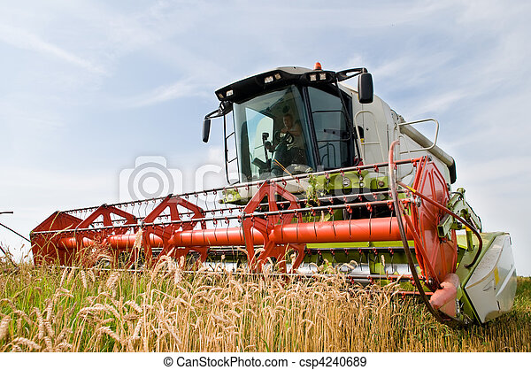 harvesting combine in the wheat field - csp4240689