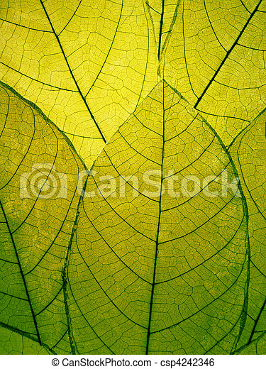Delicate green leaves detail  - csp4242346