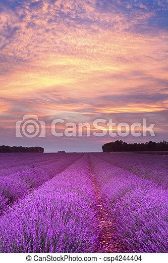 sommer, Sonnenuntergang, Lavendel - csp4244404