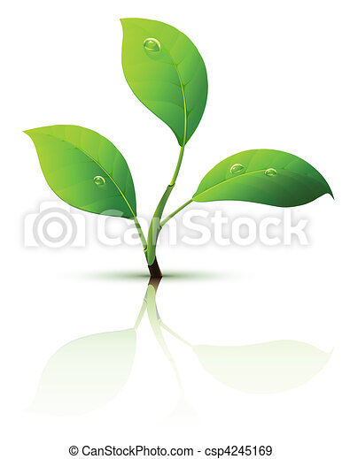 branch of sprout with green leaves  - csp4245169