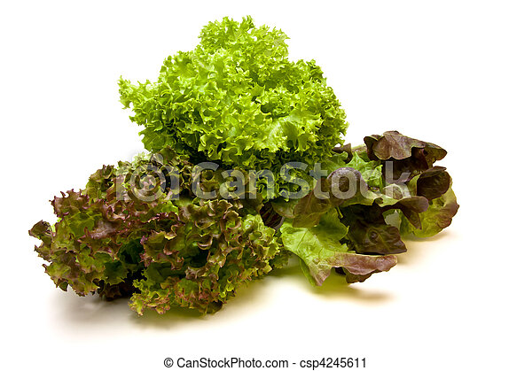 Three headed Lettuce - csp4245611