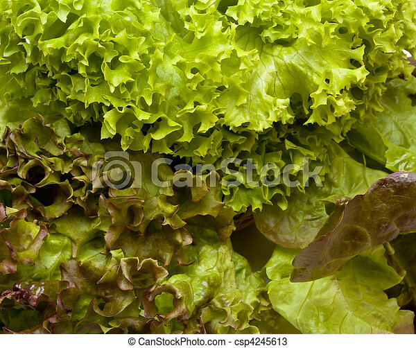 Three headed Lettuce - csp4245613