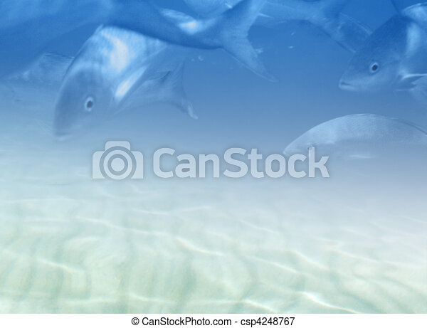 Marine fauna illustration - csp4248767