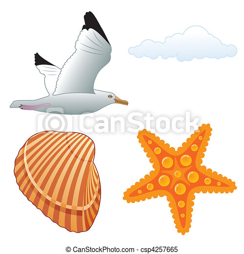 Seagull and shell - csp4257665