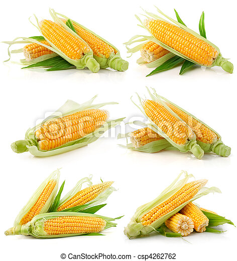 set of fresh corn vegetable with green leaves - csp4262762