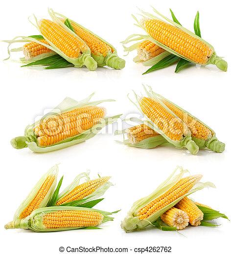 集合, 玉米, 綠色的蔬菜, 新鮮, 離開 - csp4262762
