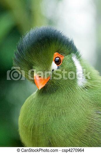 Photo de vert oiseau portrait de a exotique oiseau for Oiseau vert et rouge