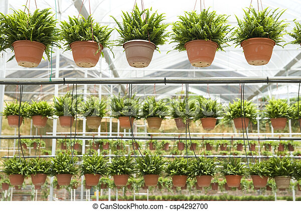 agriculture nursery farm, with pots hanging - csp4292700