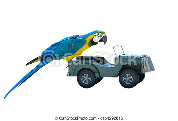 isolated parrot on a toy car - csp4292816
