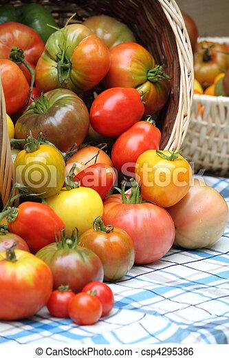 Tumbling basket of freshly picked heritage tomatoes - csp4295386