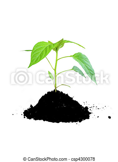 growing plant green and soil - csp4300078
