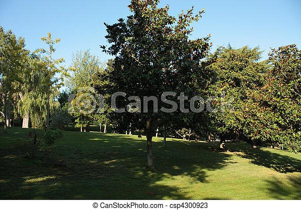 Father Cinto Verdaguer Gardens in Montjuic, Barcelona. - csp4300923