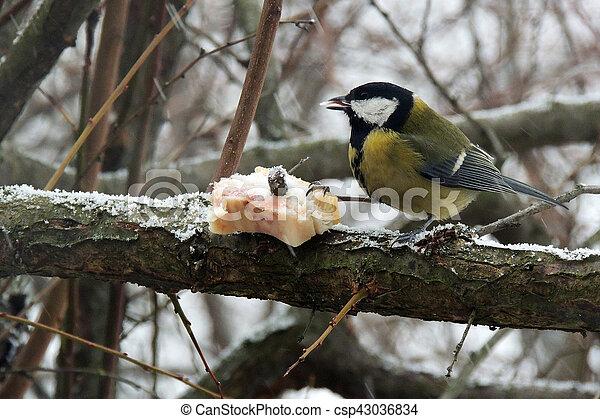 The blue tit eats fat close up. Titmouse on a tree eats the fat