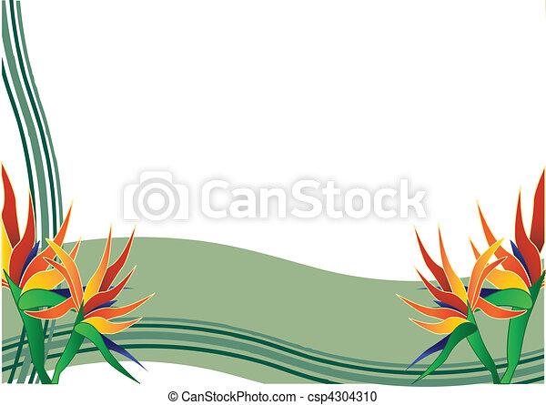 bird of paradise flower - csp4304310
