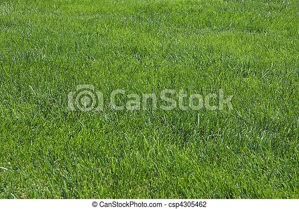 Photo de pelouse vert herbe football champ csp4305462 for Pelouse tarif