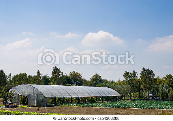 Agricultural Greenhouse on a smallholding with cabbage crops to the right. - csp4308288