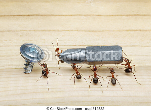 team of ants carries screwdriver to screw, teamwork - csp4312532