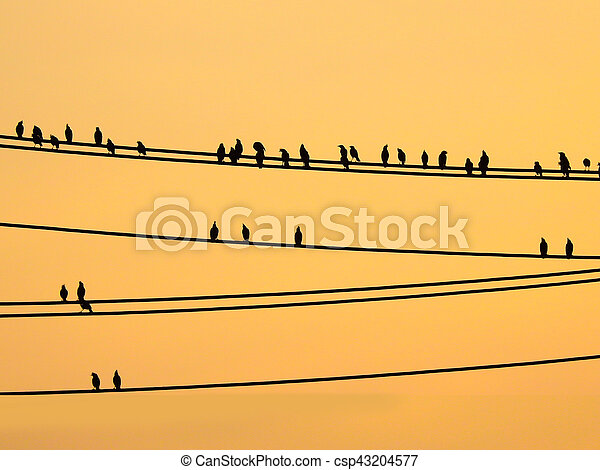 Mynas birds sitting on wires and sunset sky - csp43204577