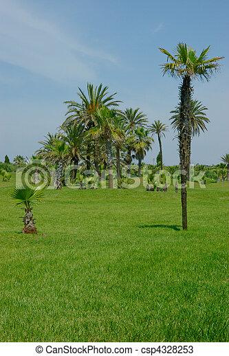 A few palms on the grass-plot - csp4328253