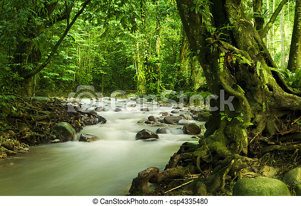 Tropical rainforest and river - csp4335480