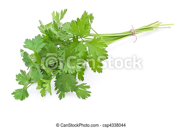 Fresh parsley  - csp4338044