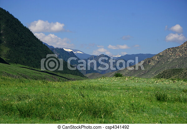 Nature landscape, meadow and mountains, wildlife of Altay - csp4341492