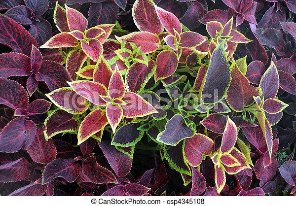 Closeup Ornamental Plants - csp4345108