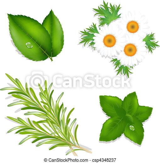 Aroma Herbs - csp4348237