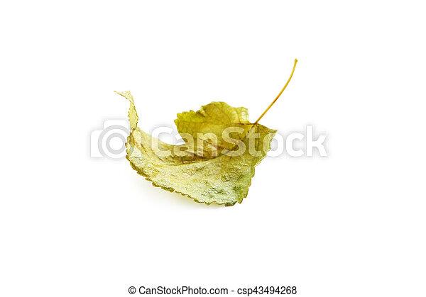 秋, 白, 葉, 隔離された, 背景 - csp43494268