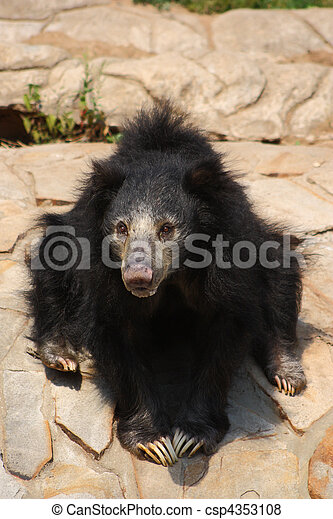 Sitting Sloth Bear - csp4353108