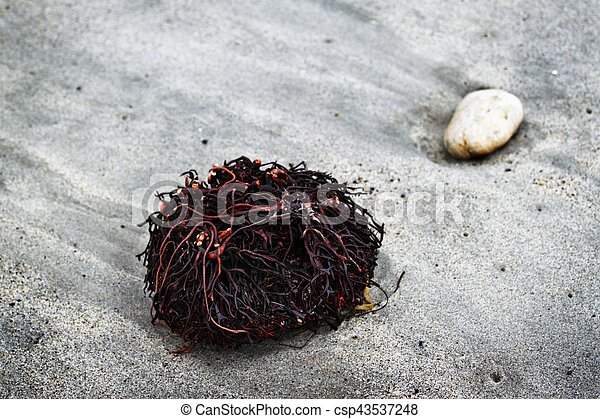 Seaweed Roots - csp43537248