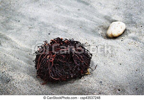 Seaweed Roots - csp43537248