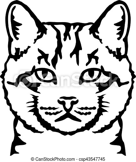 vecteur eps de vrai t te tigre chat real chat t te tigre csp43547745 recherchez des. Black Bedroom Furniture Sets. Home Design Ideas