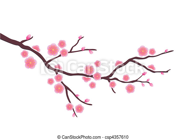 Vector Clipart of Cherry blossom in spring time csp4357610 ...