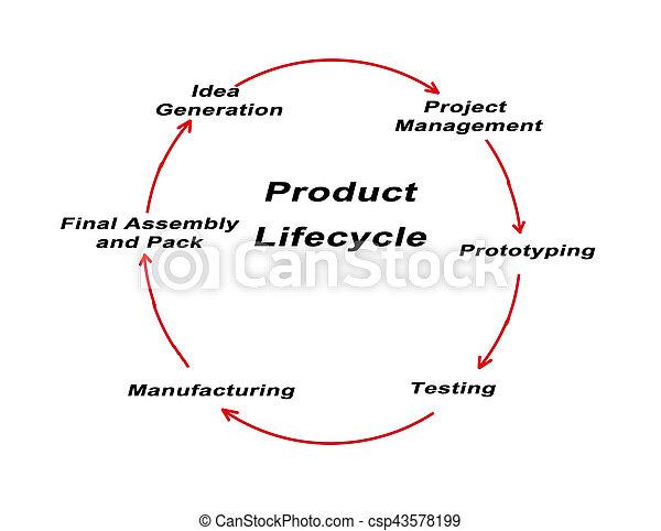 Stock options life cycle