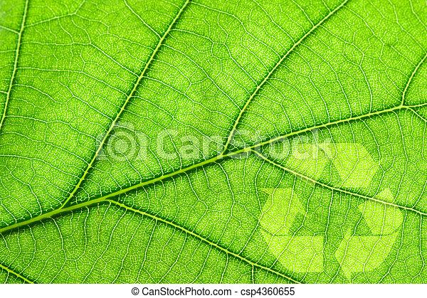 Recycling symbol on leaf - csp4360655