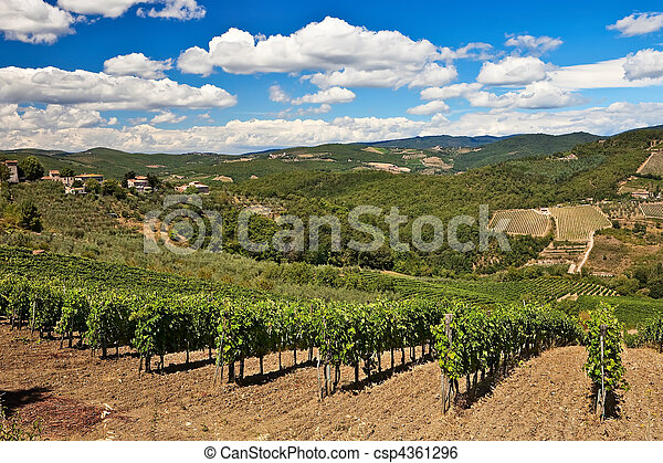 Vineyards and olive trees plantations over hills at Chianti, Italy. - csp4361296