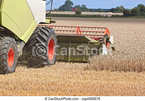 a combine harvester splitting the wheat - csp4365678