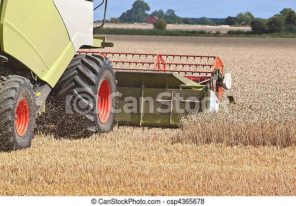 a combine harvester splitting the wheat - csp4365678