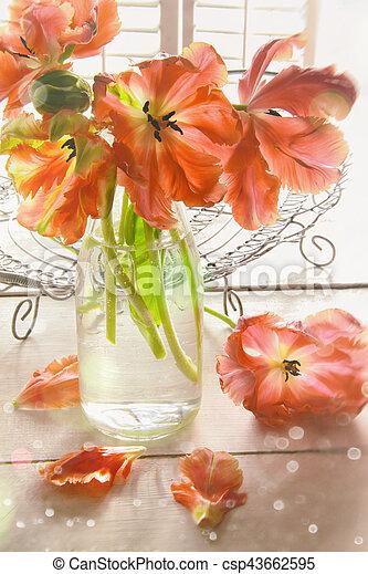 Closeup of colorful tulips near window - csp43662595