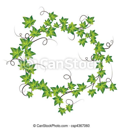 Green ivy. Vector Illustration - csp4367060