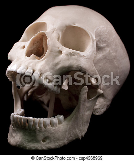 human skull stock photos and images. 31,403 human skull pictures, Human Body