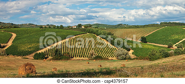 Rural landscape with vineyards on hills in Tuscany. - csp4379157