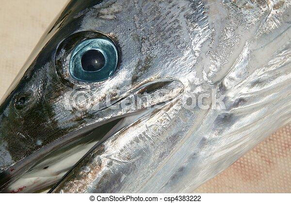 mediterranean spearfish billfish head tetrapturus belone - csp4383222
